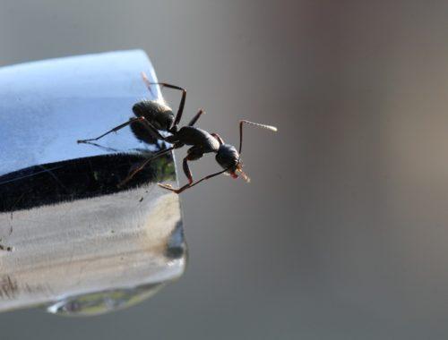 mieren verdelgen, mieren in huis, bestrijden mieren