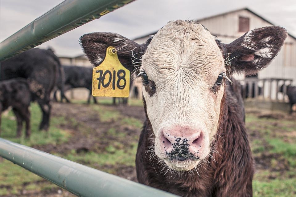 staking boeren oktober - column